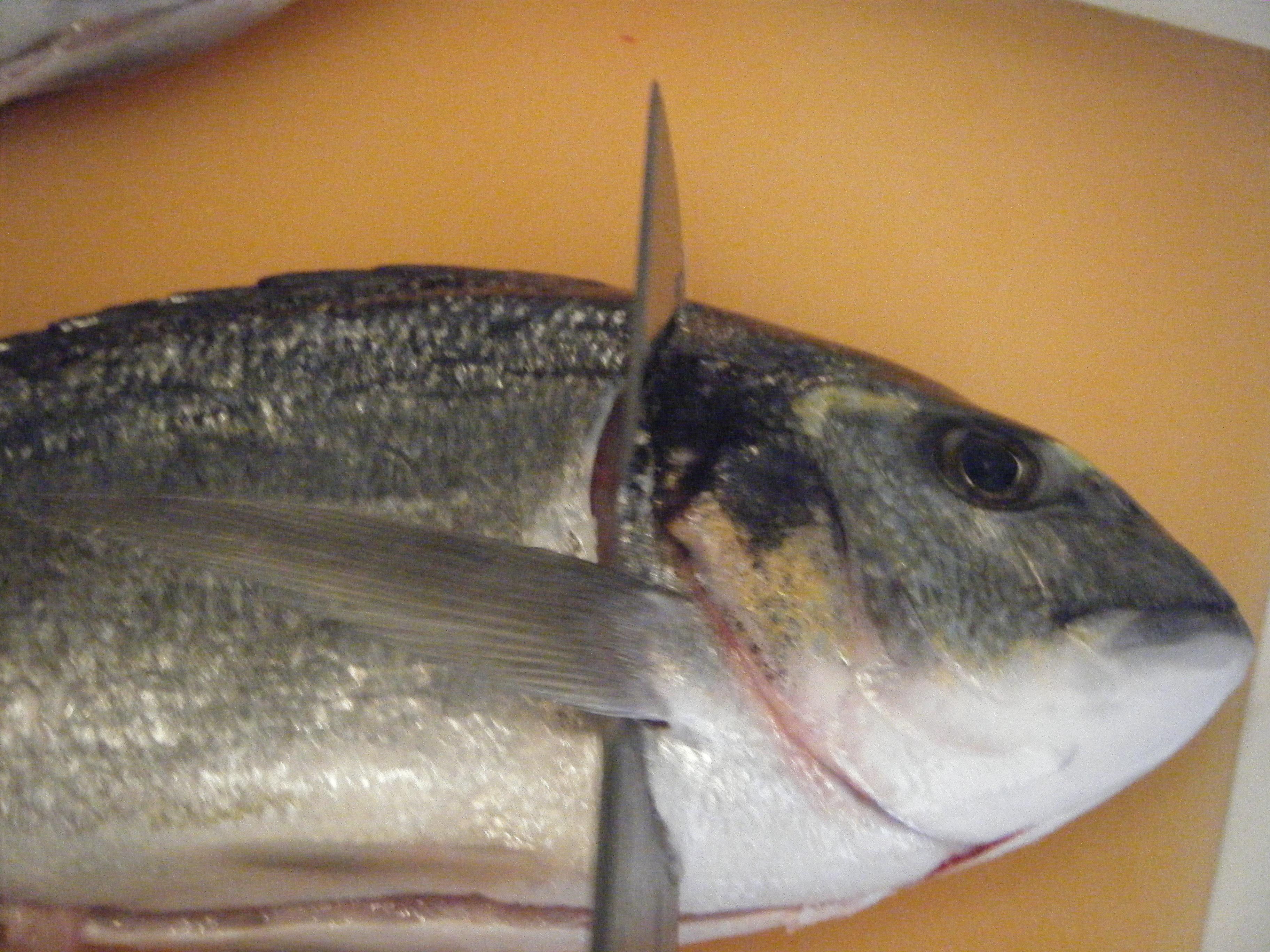Il pesce halibut